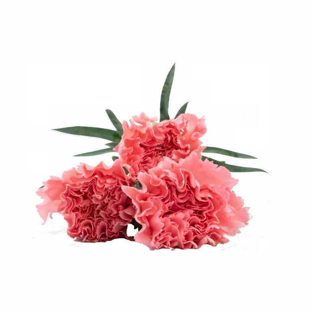 三朵康乃馨鲜花母亲节红色花朵991329png图片免抠素材