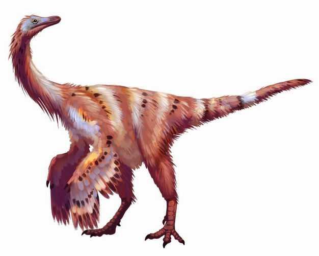 白垩纪似金翅鸟龙似鸟龙类杂食性恐龙复原图2481706png图片免抠素材