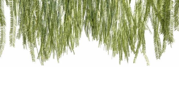 挂着的各种3D渲染的蕨类植物的树叶绿叶子452529免抠图片素材