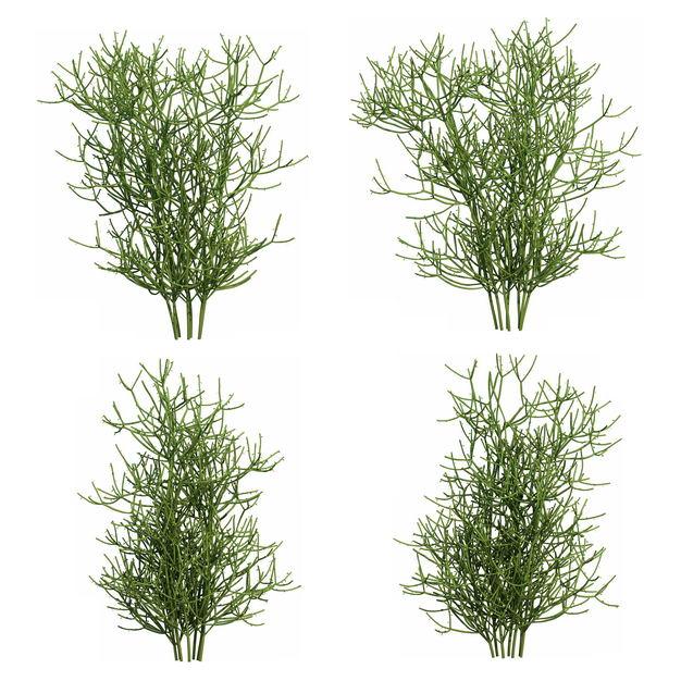 四款3D渲染的绿玉树大戟科绿植观赏植物263234免抠图片素材 生物自然-第1张