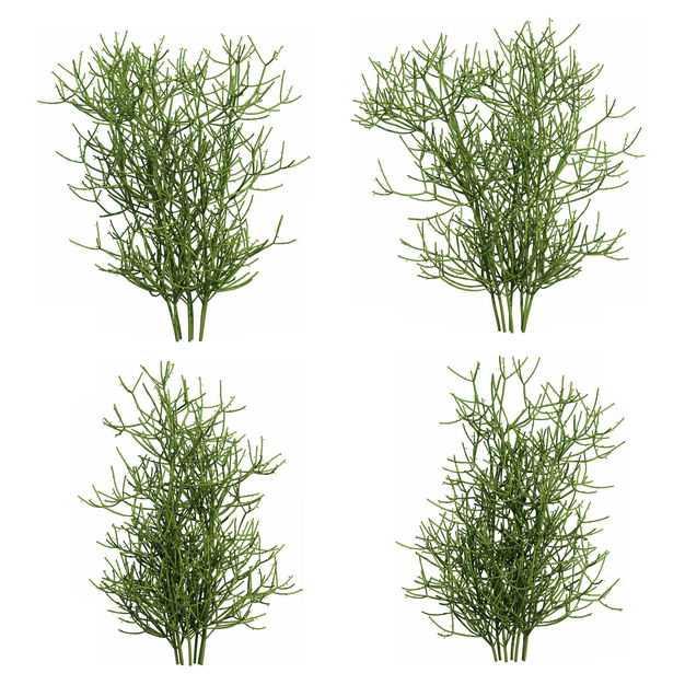四款3D渲染的绿玉树大戟科绿植观赏植物263234免抠图片素材
