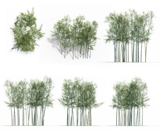 七款3D渲染的竹林毛竹绿植观赏植物288050免抠图片素材 生物自然-第1张