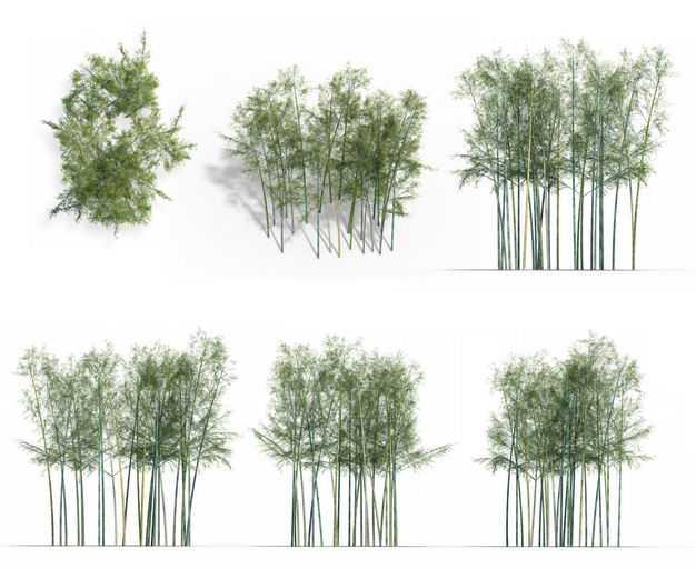 七款3D渲染的竹林毛竹绿植观赏植物288050免抠图片素材