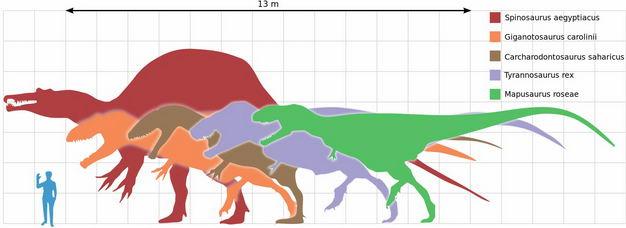 棘龙暴龙霸王龙等食肉恐龙和人类大小对比图6562016png图片免抠素材 生物自然-第1张