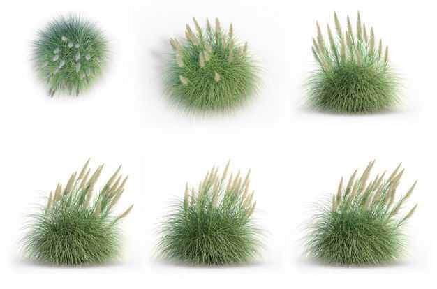 六款3D渲染的蒲苇盆栽绿植观赏植物749112免抠图片素材