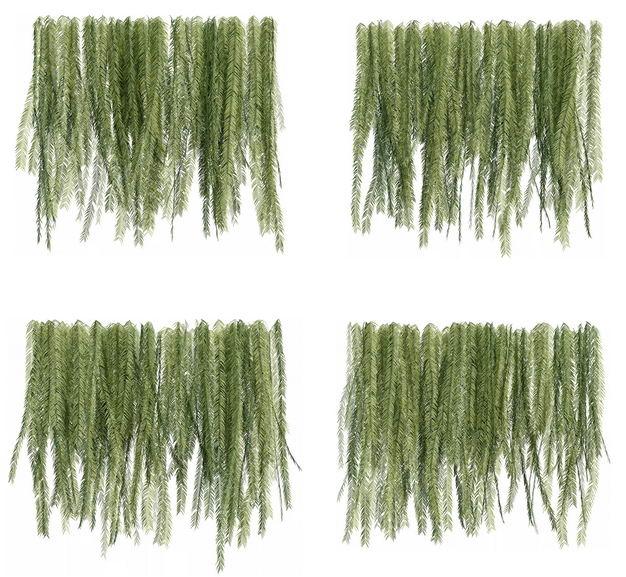 四款3D渲染的蕨类植物的树叶绿叶子258559免抠图片素材 生物自然-第1张
