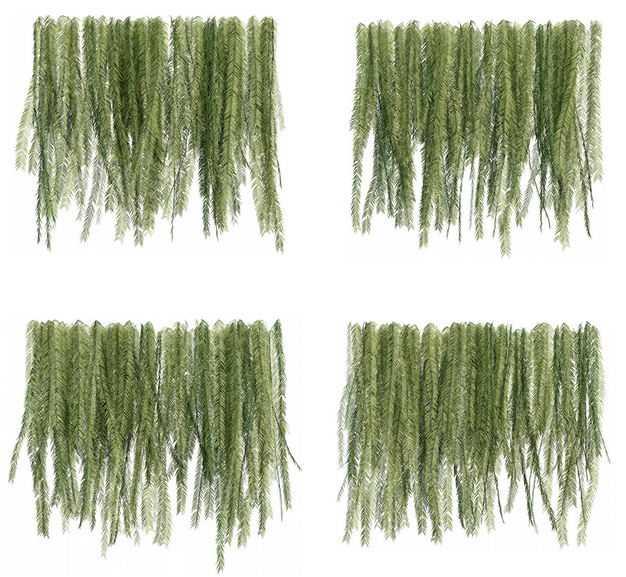四款3D渲染的蕨类植物的树叶绿叶子258559免抠图片素材