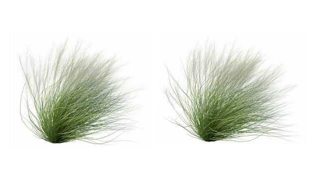 两款3D渲染的针茅草野草狗尾草绿植观赏植物555679免抠图片素材