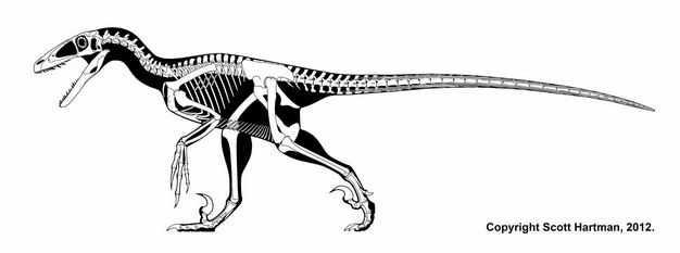 黑白色霸王龙骨架复原图3017362png图片免抠素材