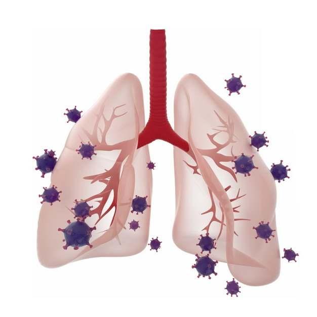 3D立体风格半透明肺部和新型冠状病毒940968png图片素材