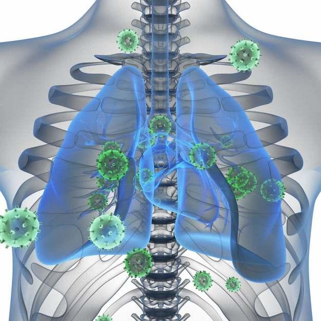 3D立体风格人体解剖图和蓝色半透明肺部和新型冠状病毒631223png图片素材