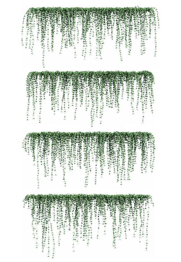 四款3D渲染的百万心观叶植物吊兰绿植观赏植物845832免抠图片素材