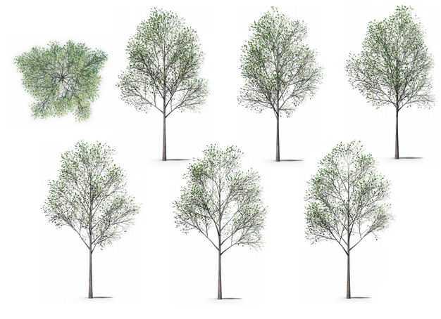 七款3D渲染的杨树大树绿树园艺绿植观赏植物676747免抠图片素材
