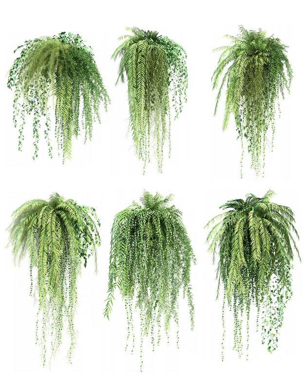 六款3D渲染的肾蕨盆栽绿植观赏植物413359免抠图片素材 生物自然-第1张