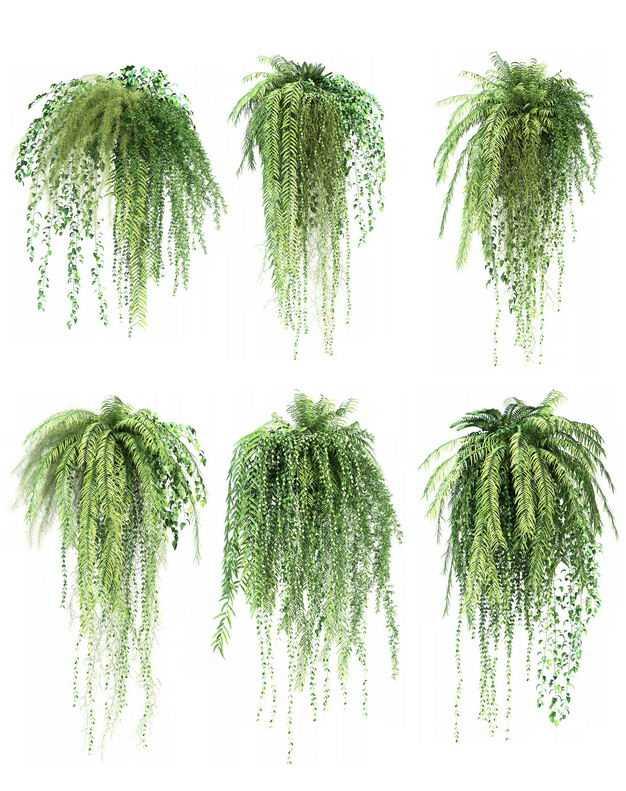 六款3D渲染的肾蕨盆栽绿植观赏植物413359免抠图片素材