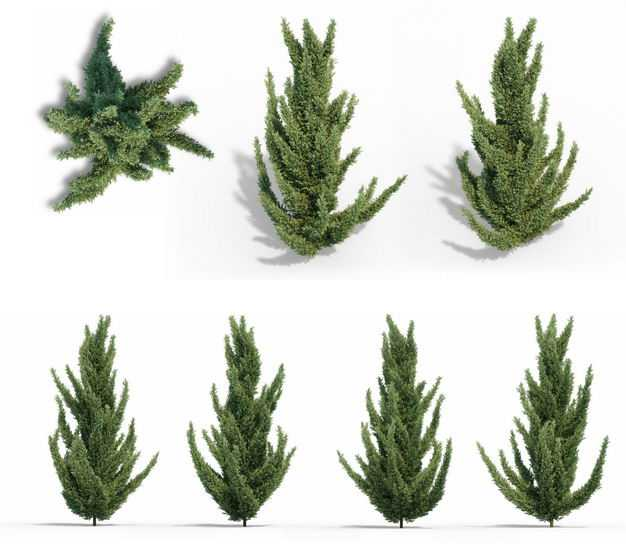 七款3D渲染的龙柏刺柏绿植观赏植物406774免抠图片素材