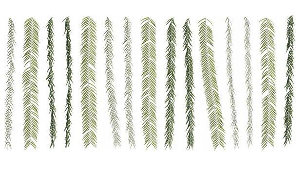 各种3D渲染的蕨类植物的树叶绿叶子600888免抠图片素材