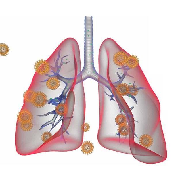 3D立体风格红色半透明肺部和新型冠状病毒723161png图片素材