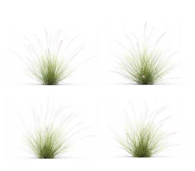 四款3D渲染的针茅野草园艺绿植观赏植物717699免抠图片素材