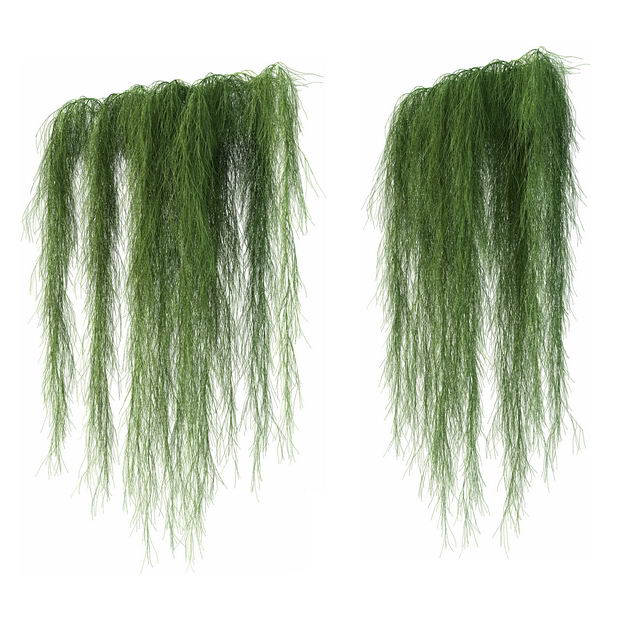 两款3D渲染的下垂的老人须松萝铁兰松萝凤梨盆栽绿植观赏植物572033免抠图片素材 生物自然-第1张