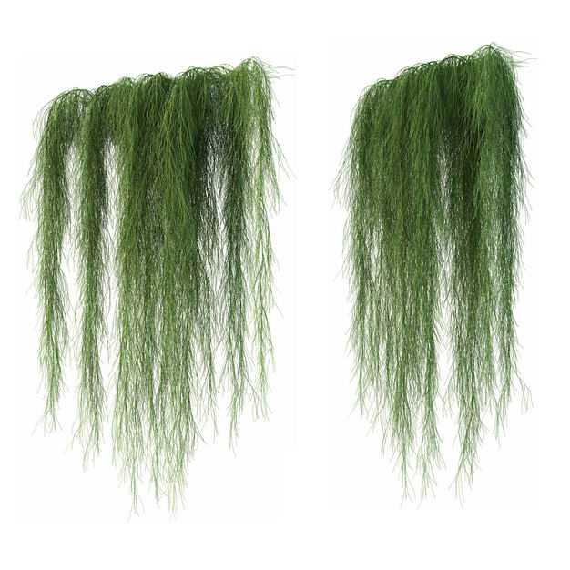两款3D渲染的下垂的老人须松萝铁兰松萝凤梨盆栽绿植观赏植物572033免抠图片素材