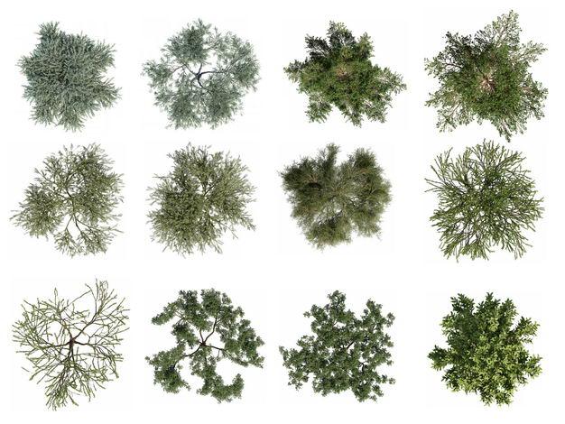 十二款3D渲染的绿色大树和树枝观赏植物891174免抠图片素材 生物自然-第1张