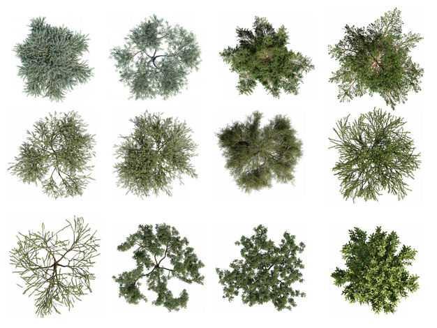 十二款3D渲染的绿色大树和树枝观赏植物891174免抠图片素材