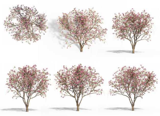 六款3D渲染的紫玉兰木兰科盆栽绿植观赏植物494456免抠图片素材
