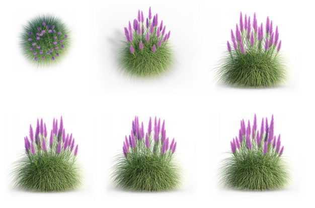六款3D渲染的细茎针茅蛇鞭菊盆栽绿植观赏植物884907免抠图片素材