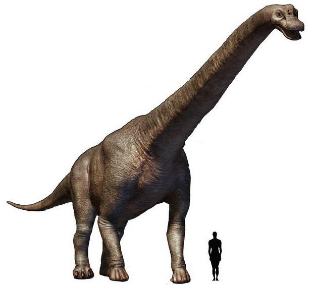 腕龙巨型恐龙和人类大小对比图1921205png图片免抠素材 生物自然-第1张