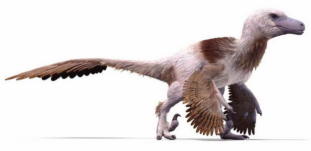 白垩纪晚期达科塔盗龙驰龙科恐龙复原图9821955png图片免抠素材 生物自然-第1张