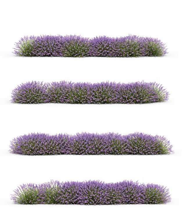 四款3D渲染的薰衣草花丛草丛绿植观赏植物496233免抠图片素材