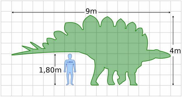 剑龙和人类大小对比图6762866png图片免抠素材 生物自然-第1张