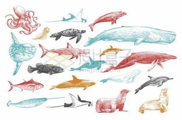 章鱼蝠鲼魔鬼鱼海豹翻车鱼海龟水母抹香鲸鲨鱼虎鲸海狮独角鲸等海洋动物涂鸦插画401318png矢量图片素材