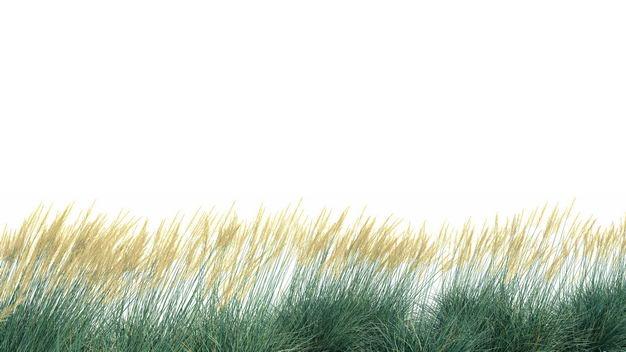 蒲苇芦苇园艺绿植观赏植物498070免抠图片素材