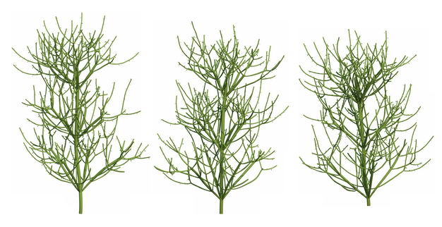 三款3D渲染的绿玉树大戟科绿植观赏植物219477免抠图片素材 生物自然-第1张