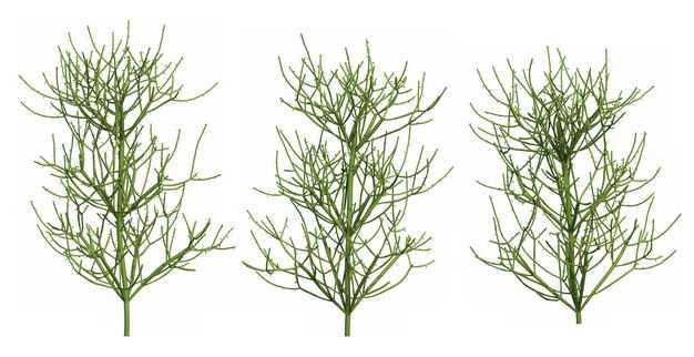 三款3D渲染的绿玉树大戟科绿植观赏植物219477免抠图片素材