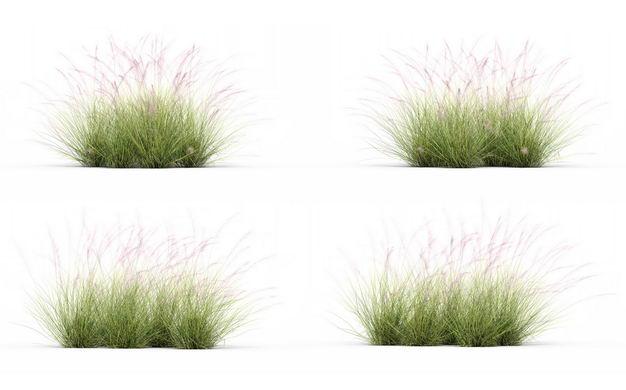 四款3D渲染的针茅野草草丛园艺绿植观赏植物937794免抠图片素材