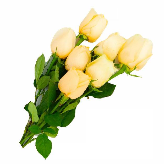 一束带叶子的黄玫瑰花鲜花黄色花朵214805png图片免抠素材