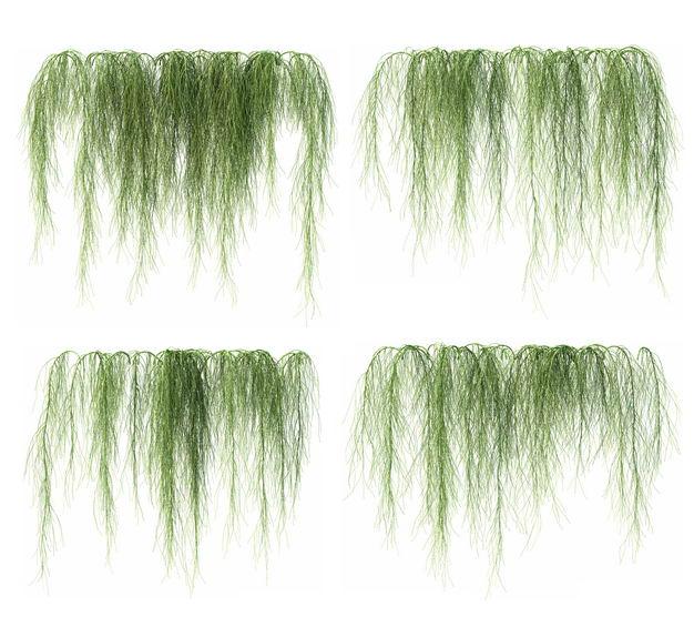 四款3D渲染的老人须松萝铁兰松萝凤梨盆栽绿植观赏植物283730免抠图片素材 生物自然-第1张