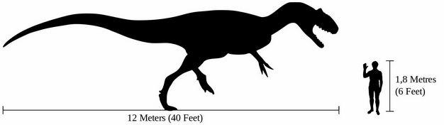霸王龙暴龙科食肉恐龙和人类大小对比图5328437png图片免抠素材 生物自然-第1张