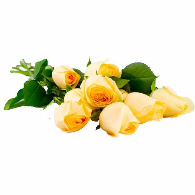 放在地上的一束黄色的玫瑰花鲜花196936png图片免抠素材