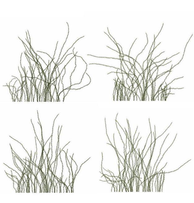 四款3D渲染的乌拉草野草园艺绿植观赏植物885664免抠图片素材 生物自然-第1张