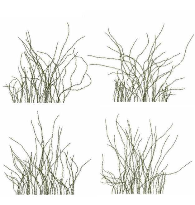 四款3D渲染的乌拉草野草园艺绿植观赏植物885664免抠图片素材