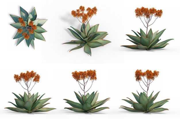 六款3D渲染的开花龙舌兰绿植观赏植物959884免抠图片素材
