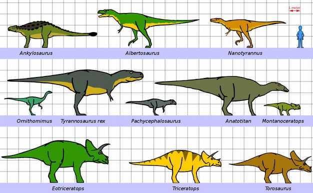 甲龙暴龙异特龙三角龙等恐龙和人类大小对比图1575976png图片免抠素材