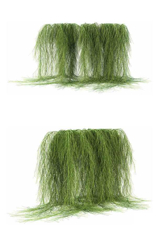 两款3D渲染的浓密的老人须松萝铁兰松萝凤梨盆栽绿植观赏植物424369免抠图片素材