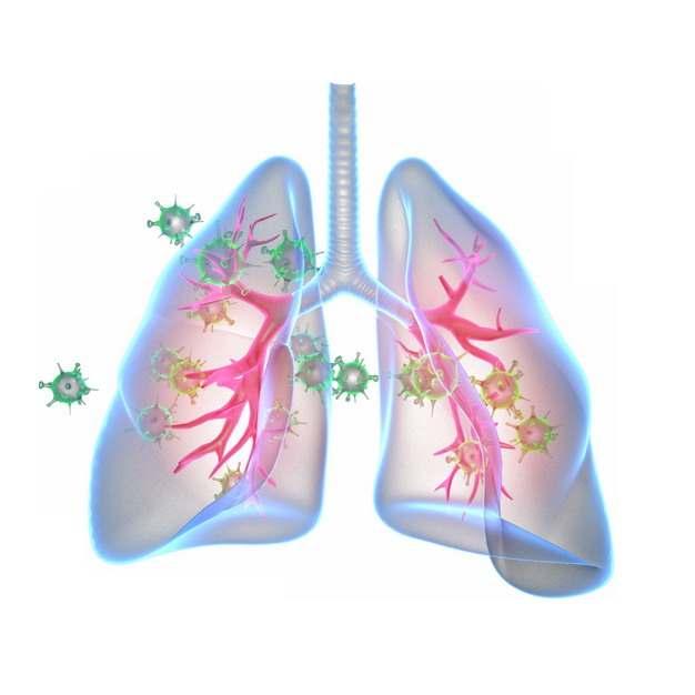 3D立体风格半透明肺部和绿色的新型冠状病毒111953png图片素材