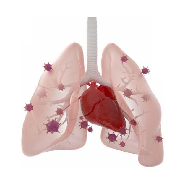 3D立体风格肉色半透明肺部和红色新型冠状病毒635198png图片素材
