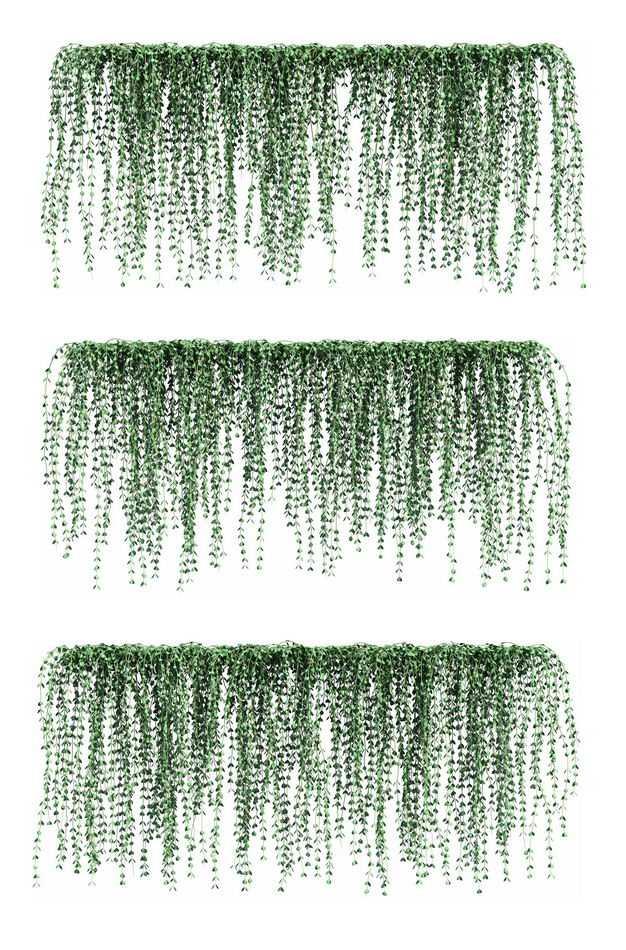 三款3D渲染的翡翠珠观叶植物吊兰绿植观赏植物585522免抠图片素材